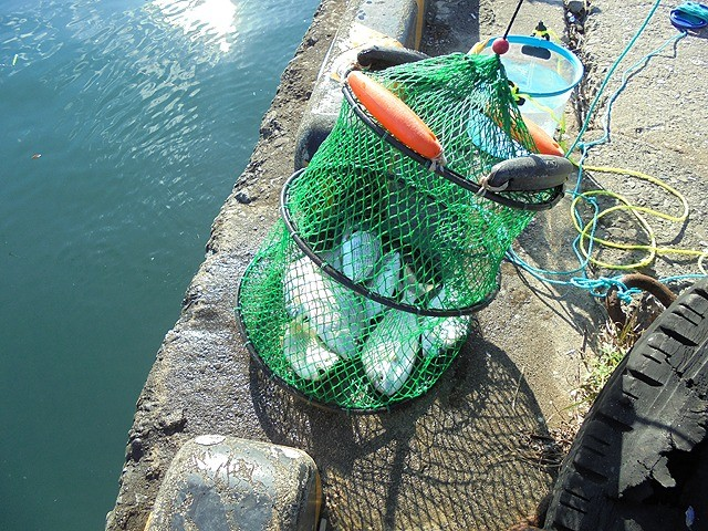 三重の釣り場 尾鷲港 中川河口付近 FISH&MAPS